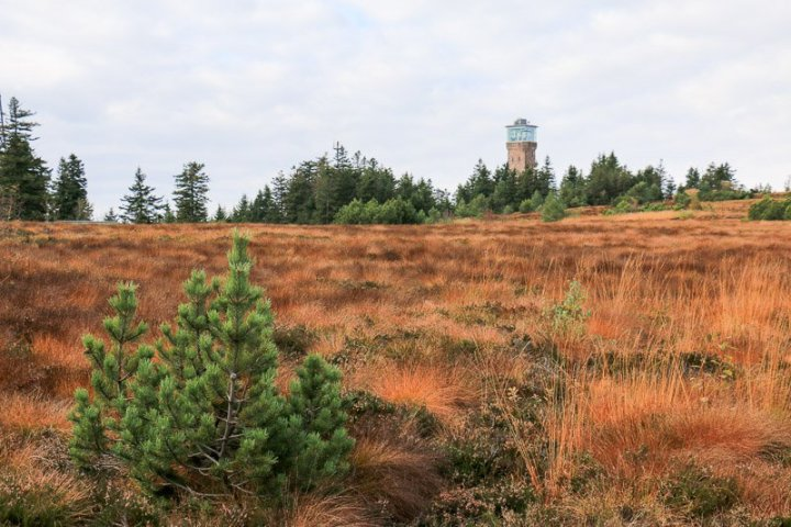 Hornisgrinde-Turm