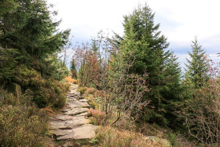 Abstieg vom Hornisgrindenturm zum Mummelsee