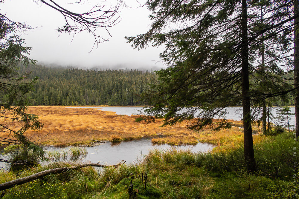 Forstgut Regen, Bayerischer Wald