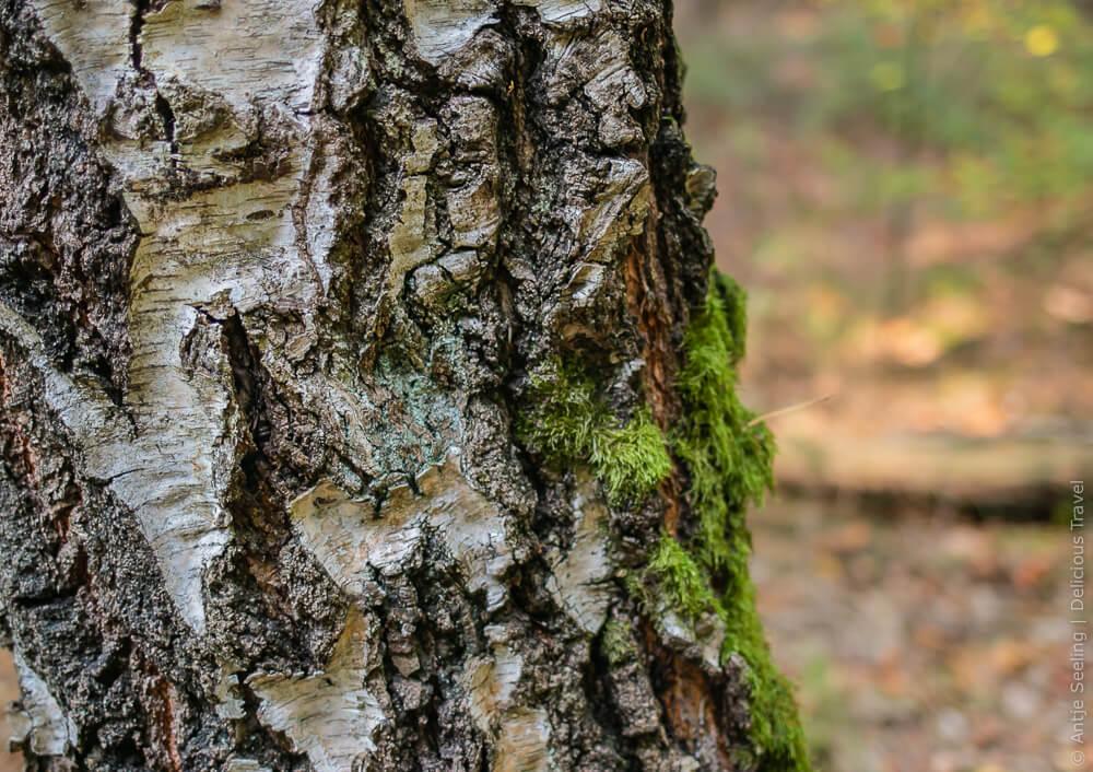 Waldbaden: Erleben mit allen Sinnen, z.B. eine Rinde berühren