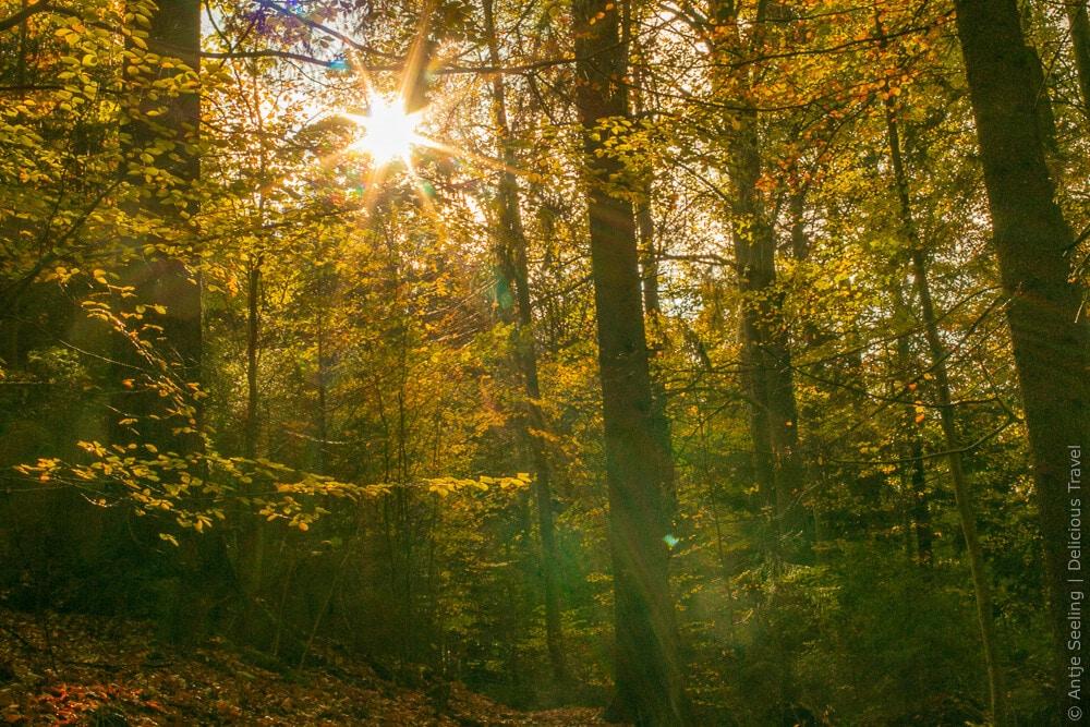 Waldbaden Sonnenstrahlen kommen durch die Blätter