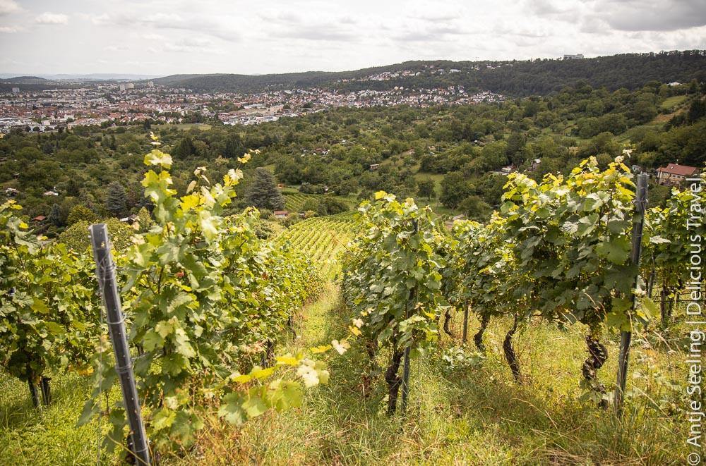 Blick von den Gerlinger Weinbergen bis nach Stuttgart