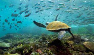 Equateur-galapagos