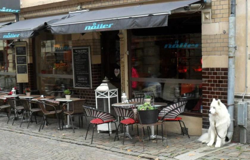weißer-hund-vor-einem-café-in-göteburg