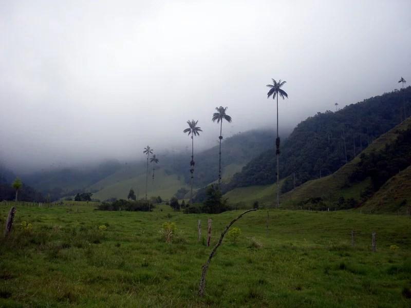 wachspalmen cocora