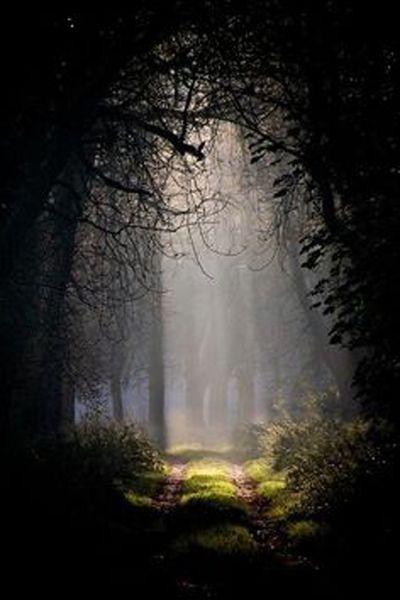 dcforest