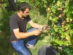 リーフェル ビオディナミ農法