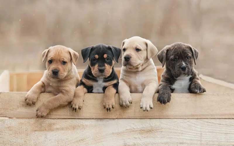 Le Puppy-Class non le vogliamo