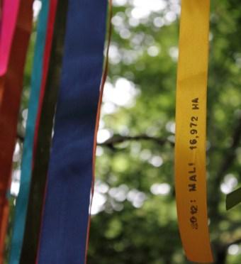 True Colours0107
