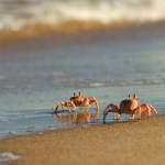 Crab Walking Through Grief: Letting Go