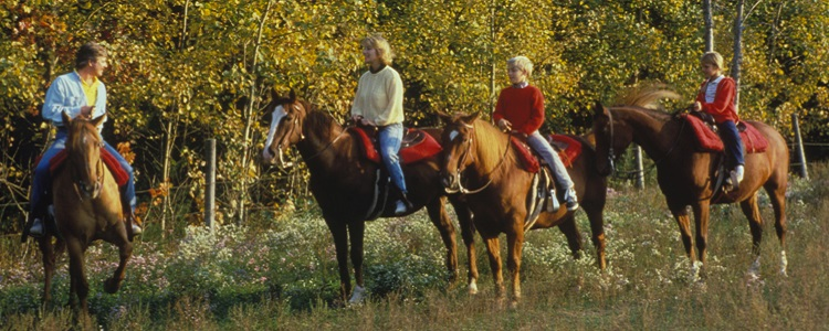 Horseback Riding And Horsedrawn Wagon Tours As Presented By Meadowbrook Resort & Dells Packages In Wisconsin Dells