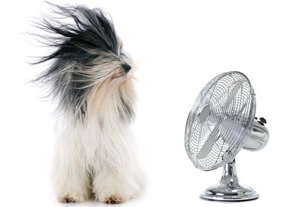 Long-haired dog standing in front of a fan - Plumbing, heating, air-conditioning, HVAC