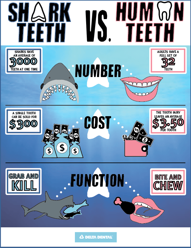 Shark Week Infographic V3-01