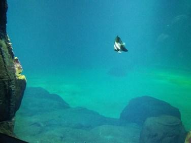 Visite du grand Nausicaa