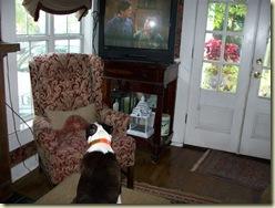 rebel watching tv