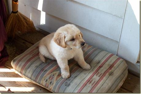 First Puppy 10.28.07 031
