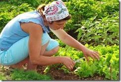gardennkng