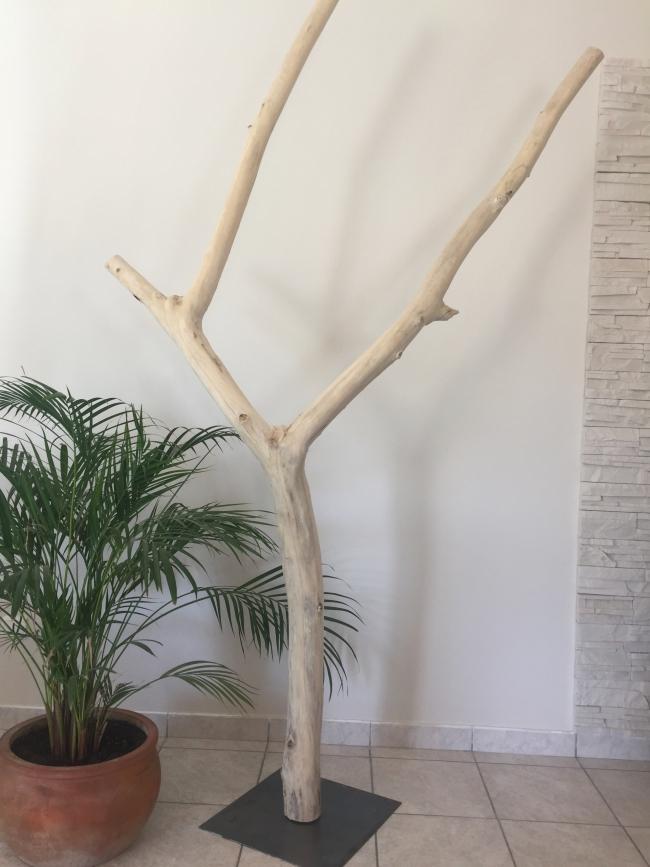arbre en bois flotte baleares
