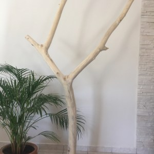 Bois flotté. Grand arbre en bois flotté, socle en acier. Deluxe Créations 66