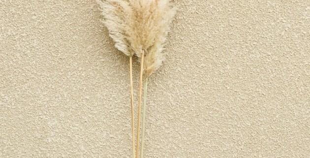 Tiges herbes de la Pampa dorées Deluxe Créations