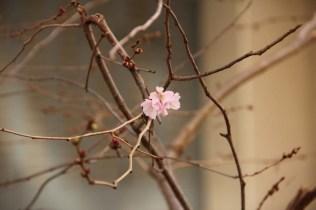 Au début du printemps.