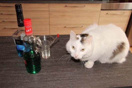 Le bar à chat