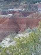 Painted Desert Arizona (19)