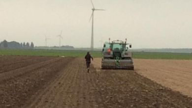 Photo of Uitkomst onderzoek: 'Omstandigheden in Hollands Kroon zeer gunstig voor de agrarische sector'