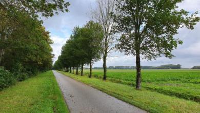 Photo of Iepziekte in Hollands Kroon