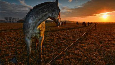 Photo of Het polderlandschap door de lens van Kenneth Stamp