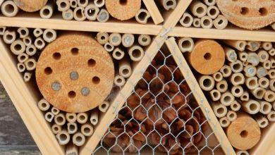 Photo of En ons altijd weer boeit door Peter C. Meijer: 'Metselbijen'