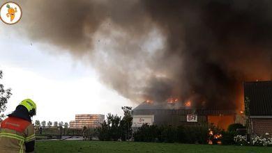 Photo of Twee loodsen en nieuwe bollenoogst in brand