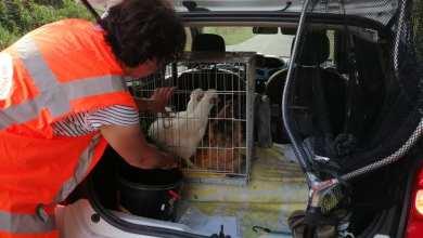 Photo of Opnieuw kippen gedumpt in het Robbenoordbos