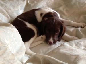 Jessie; The New Puppy