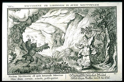 Nyctimene's Transformation into Athena's Owl