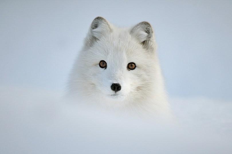 animals in winter 12 - 19 lindas fotografias de animais selvagens durante o inverno