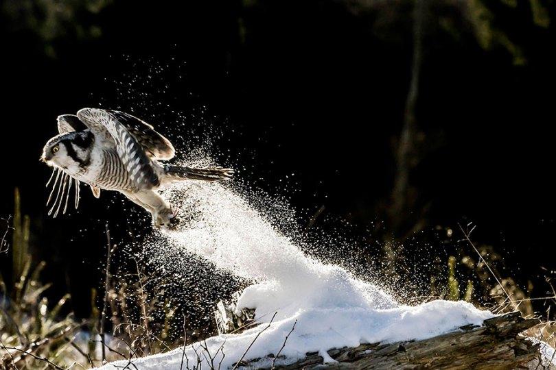 animals in winter 20 - 19 lindas fotografias de animais selvagens durante o inverno