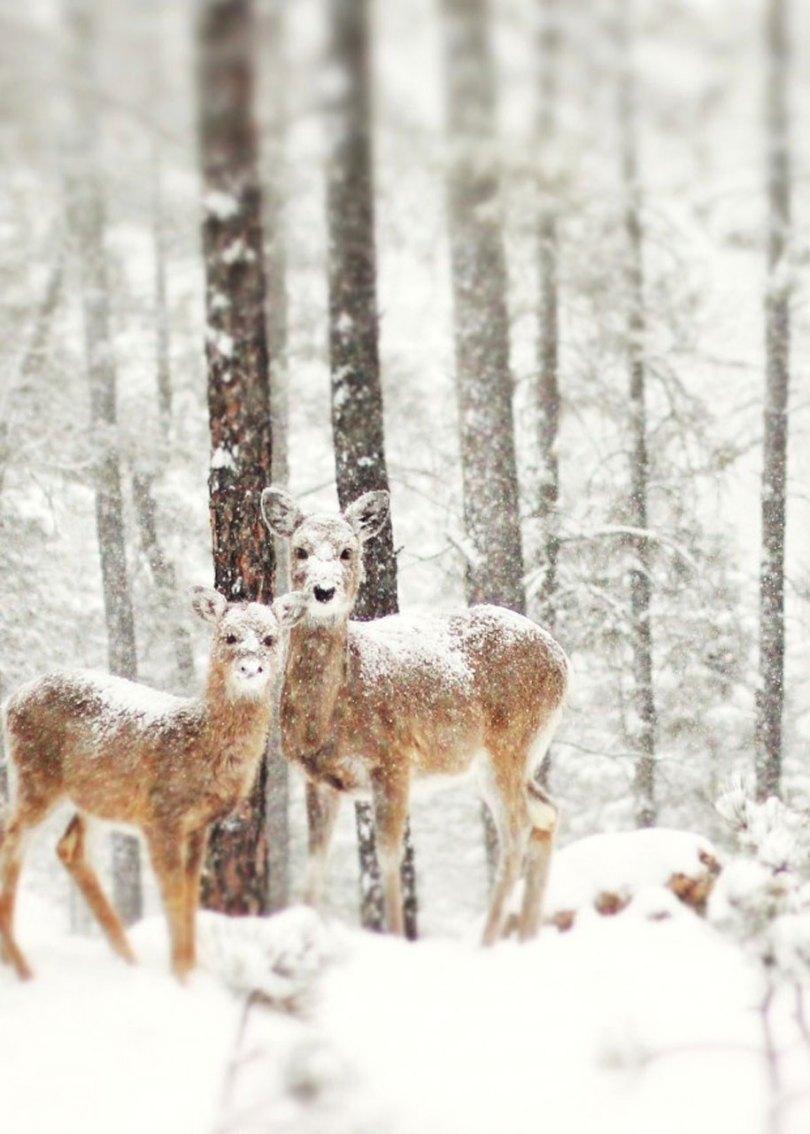 animals in winter 4 - 19 lindas fotografias de animais selvagens durante o inverno