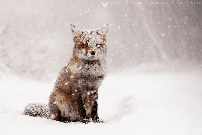 animals in winter 5 - 19 lindas fotografias de animais selvagens durante o inverno