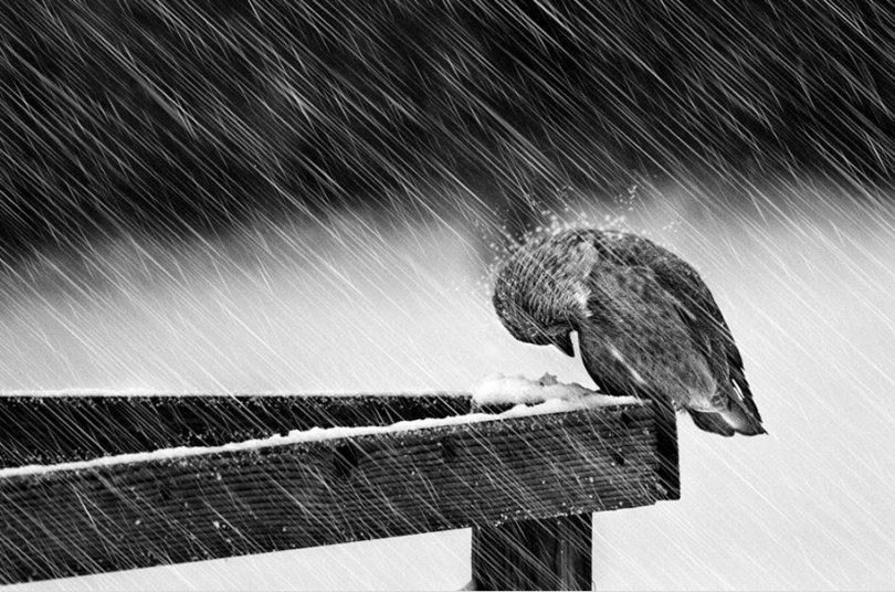 animals in winter 7 - 19 lindas fotografias de animais selvagens durante o inverno