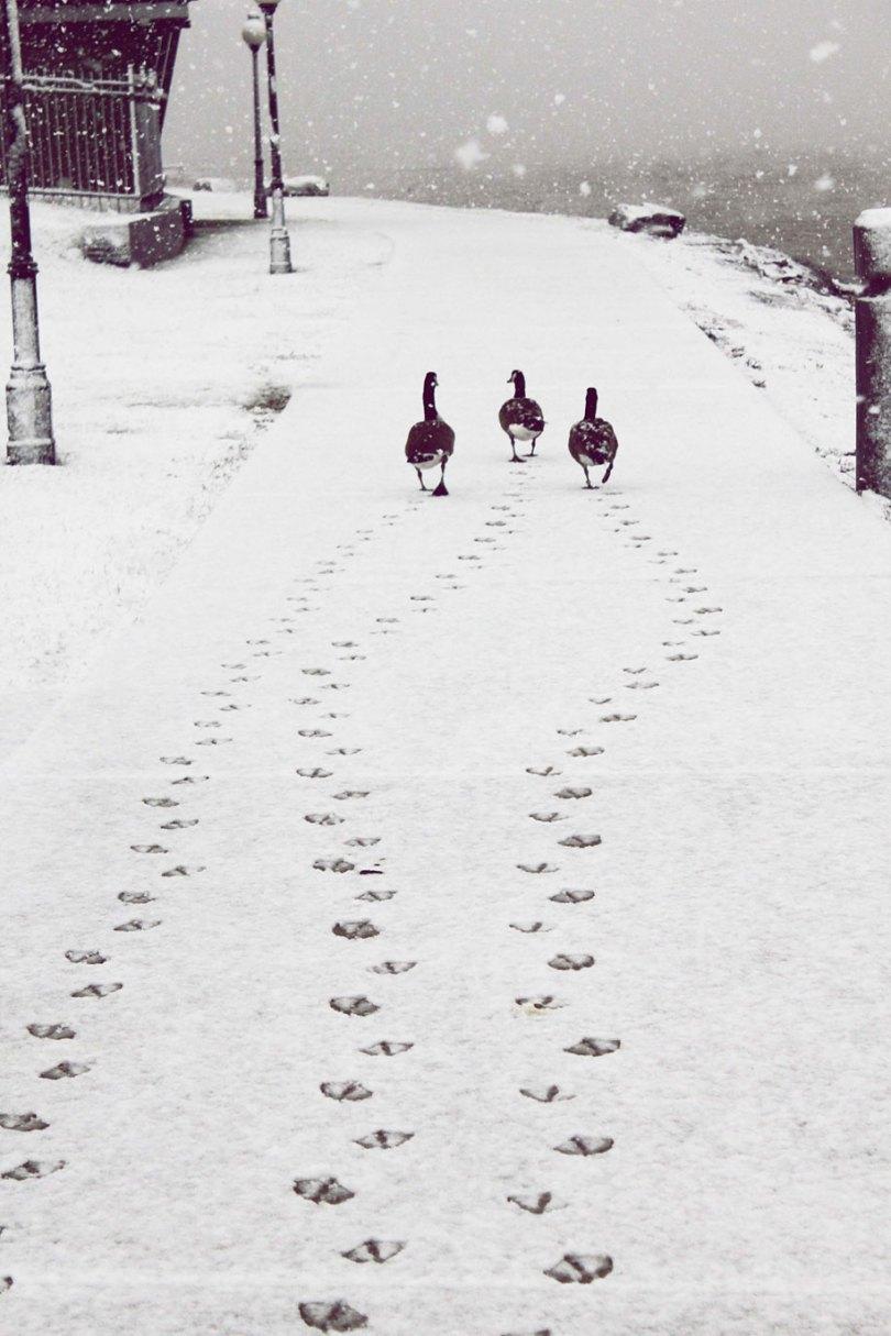animals in winter 9 - 19 lindas fotografias de animais selvagens durante o inverno