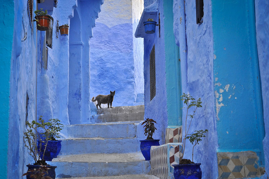 https://i1.wp.com/www.demilked.com/magazine/wp-content/uploads/2014/06/blue-town-walls-chefchaouen-morocco-2.jpg