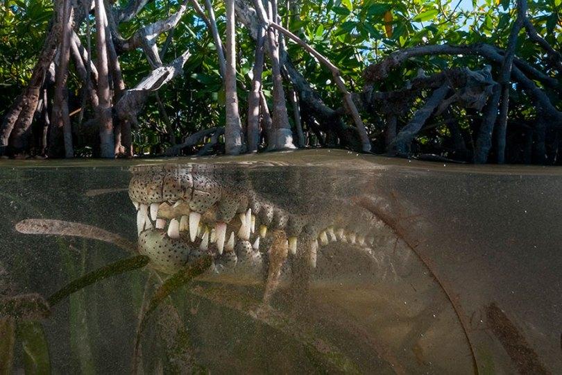 surface half underwater photography over under matty smith 11 - Fotografias espetaculares subaquáticas de Matty Smith