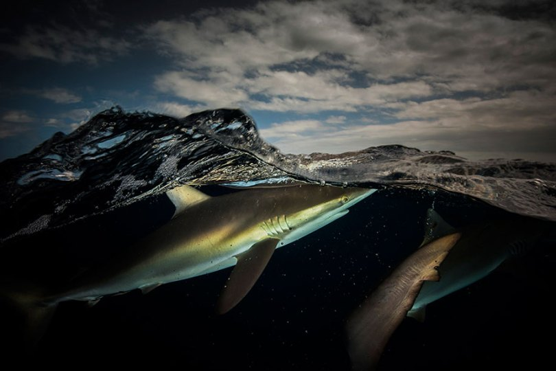 surface half underwater photography over under matty smith 12 - Fotografias espetaculares subaquáticas de Matty Smith