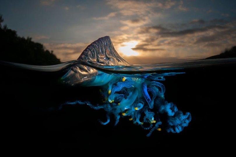 Superfície-metade-subaquática-fotografia-over-under-matty-smith-13