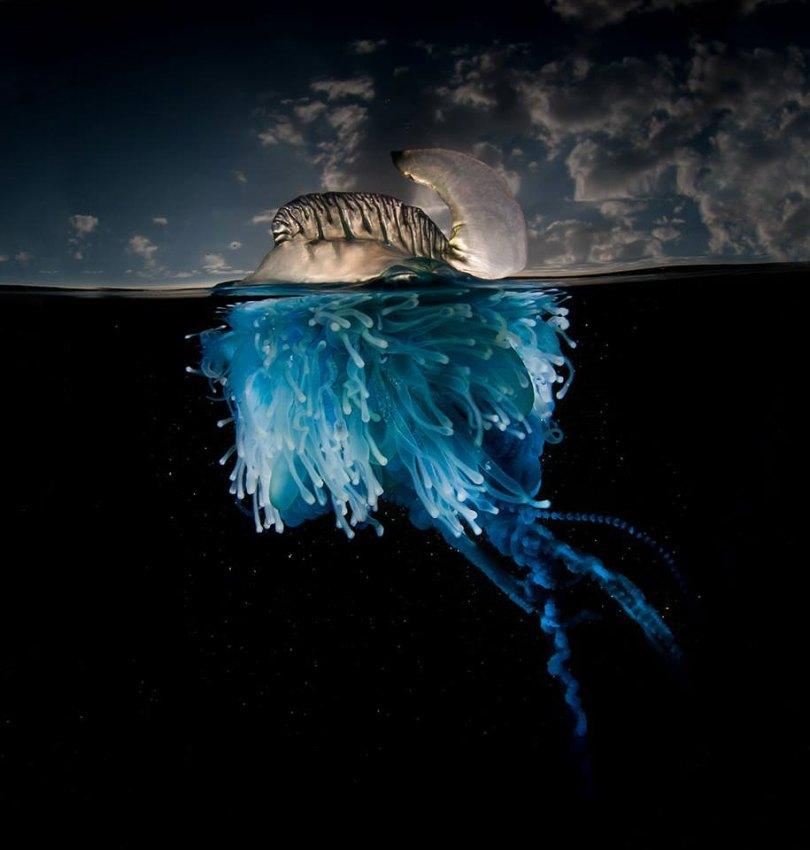 Superfície-meia-fotografia-subaquática-over-under-matty-smith-17