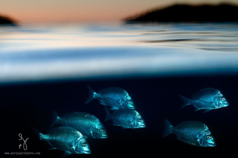 Superfície-meia-fotografia-subaquática-over-under-matty-smith-20