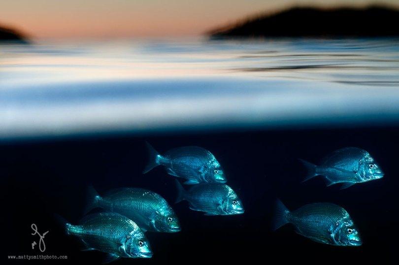 surface half underwater photography over under matty smith 20 - Fotografias espetaculares subaquáticas de Matty Smith