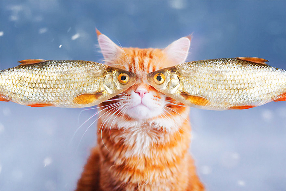 professional-cat-photography-kotleta-cutlet-kristina-makeeva-hobopeeba-14