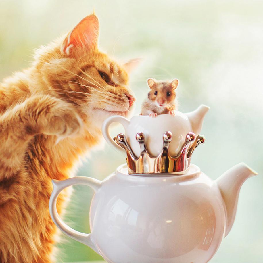 professional-cat-photography-kotleta-cutlet-kristina-makeeva-hobopeeba-17
